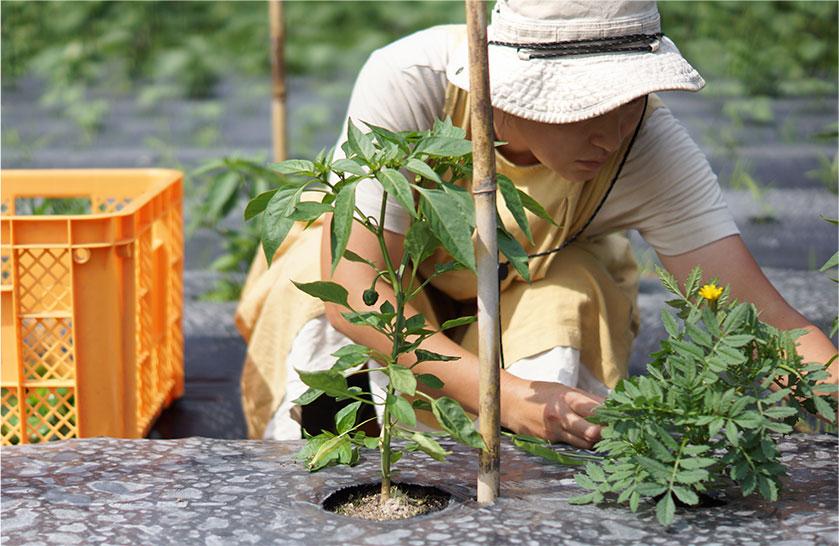 寿山のお野菜